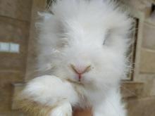 خرگوش سر حال بازیگوش در شیپور